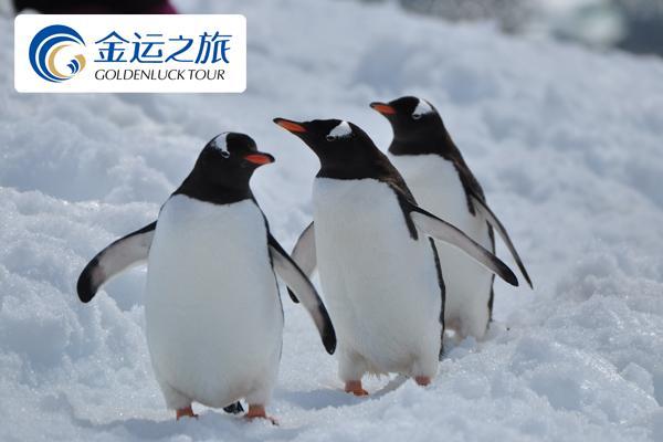 南极追梦之旅 ―经典南极16日追梦之旅