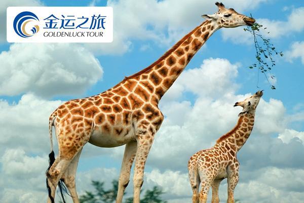 【广州长隆3日精选自由行】野生动物园+欢乐世界.全程专车接送.2晚长隆主题公寓(广州起止)