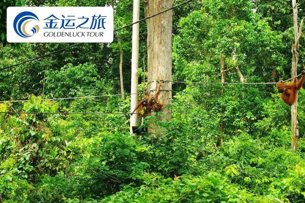 西必洛人猿保护中心